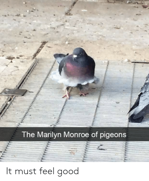 marilyn: The Marilyn Monroe of pigeons It must feel good