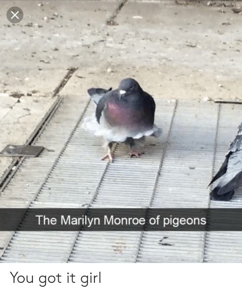 Girl, Marilyn Monroe, and Got: The Marilyn Monroe of pigeons You got it girl