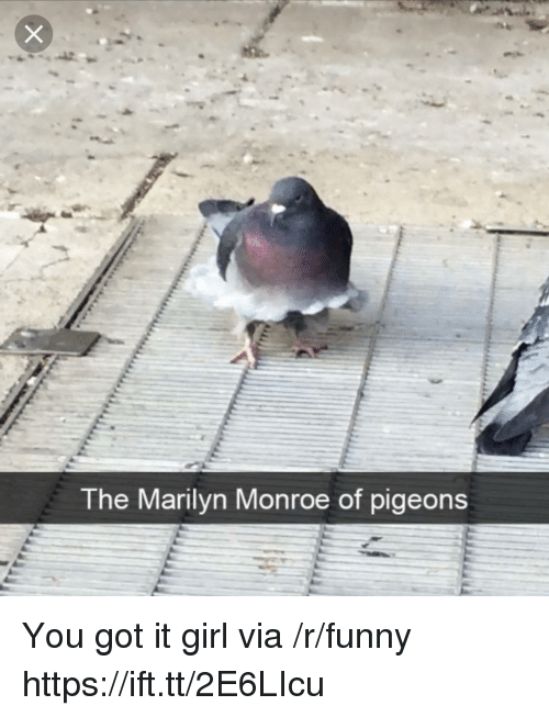 Funny, Girl, and Marilyn Monroe: The Marilyn Monroe of pigeons You got it girl via /r/funny https://ift.tt/2E6LIcu