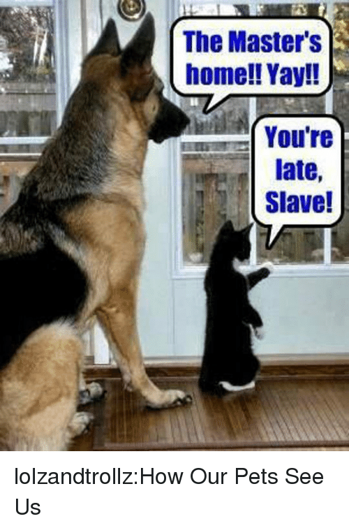 the masters: The Master's  home!! Yay!!  Youre  late,  Slave! lolzandtrollz:How Our Pets See Us
