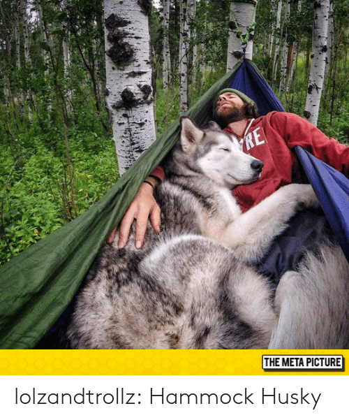 Hammock: THE META PICTURE lolzandtrollz:  Hammock  Husky