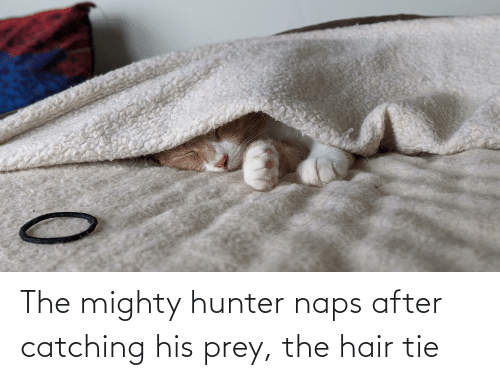 Naps: The mighty hunter naps after catching his prey, the hair tie