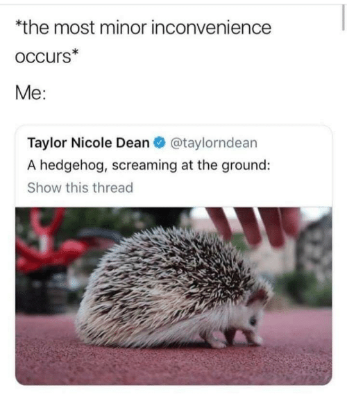 screaming: *the most minor inconvenience  occurs*  Me:  Taylor Nicole Dean O @taylorndean  A hedgehog, screaming at the ground:  Show this thread