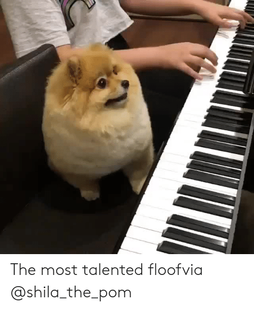 Instagram, Target, and Blank: The most talented floofvia @shila_the_pom