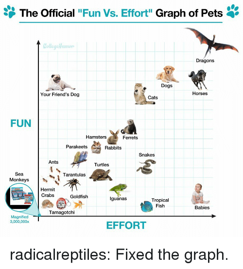 """Cats, Dogs, and Friends: The Official """"Fun Vs. Effort"""" Graph of Pets '  Dragons  Dogs  Your Friend's Dog  Horses  Cats  FUN  Hamsters  Ferrets  Parakeets  Rabbits  Snakes  Ants  Turtles  Sea  Monkeys  Tarantulas  Hermit  Crabs  Goldfish  lguanas  Tropical  Fish  Babies  Tamagotchi  Magnified  3,000,000x  EFFORT radicalreptiles:  Fixed the graph."""
