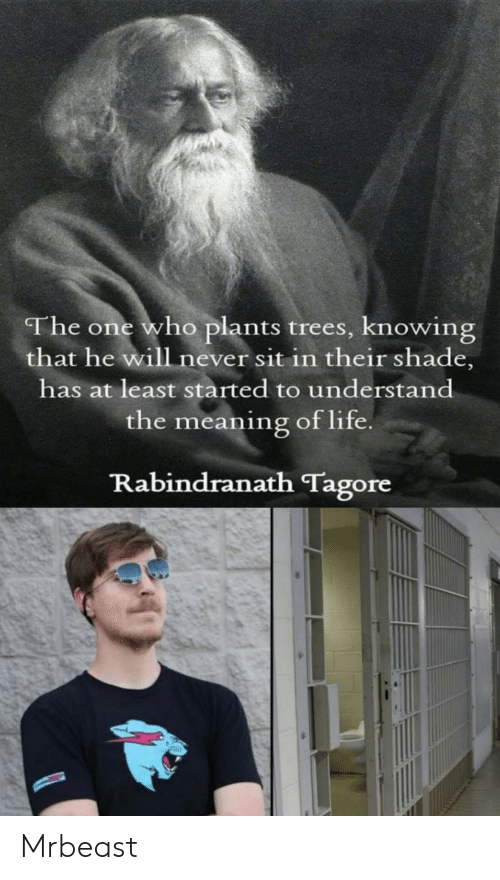 Meaning: The one who plants trees, knowing  that he will never sit in their shade,  has at least started to understand  the meaning of life  Rabindranath Tagore Mrbeast