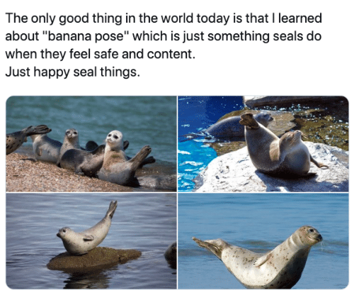 """Banana, Good, and Happy: The only good thing in the world today is that I learned  about """"banana pose"""" which is just something seals do  when they feel safe and content.  Just happy seal things."""