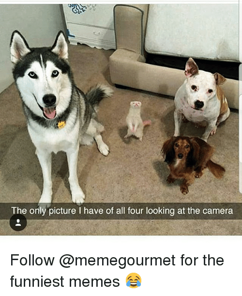 Memes, Camera, and 🤖: The only picture I have of all four looking at the camera Follow @memegourmet for the funniest memes 😂