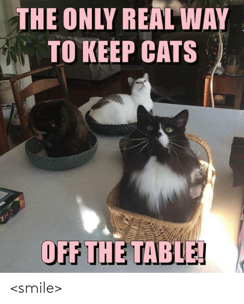 Cats, Memes, and Smile: THE ONLY REAL WAY  TO KEEP CATS  OFF THE TAB  LE <smile>