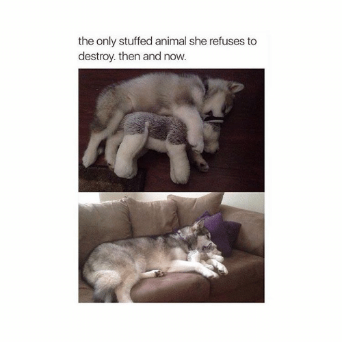 Animeds: the only stuffed animal she refuses to  destroy then and now.
