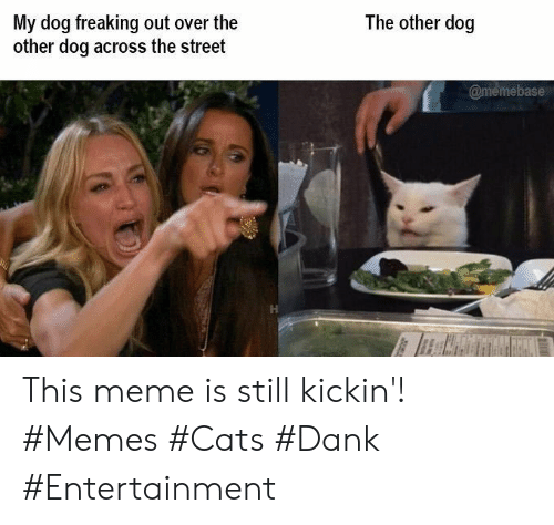 freaking out: The other dog  My dog freaking out over the  other dog across the street  @memebase This meme is still kickin'! #Memes #Cats #Dank #Entertainment