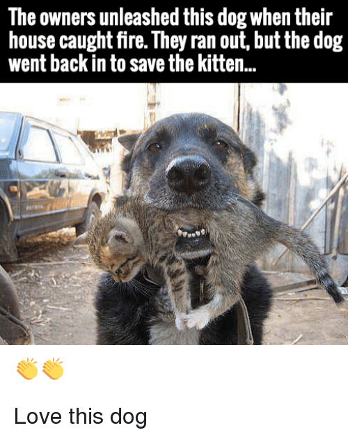 unleashed: The owners unleashed this dog when their  house caught fire. They ran out, but the dog  went back in to save the kitten.. Love this dog