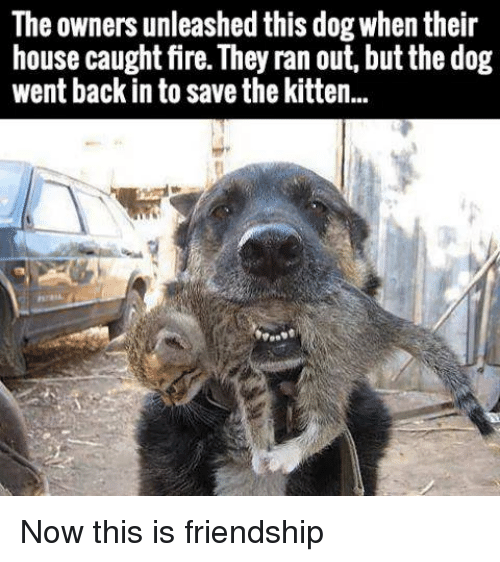 unleashed: The owners unleashed this dog when their  house caught fire. They ran out, but the dog  went back in to save the kitten.. Now this is friendship