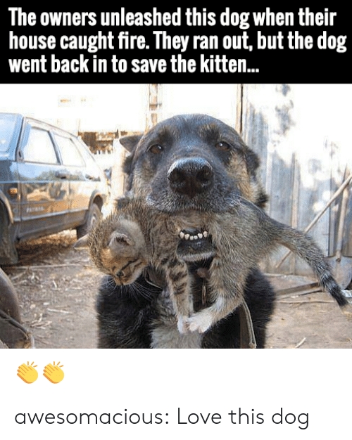 unleashed: The owners unleashed this dog when their  house caught fire. They ran out, but the dog  went back in to save the kitten.. awesomacious:  Love this dog