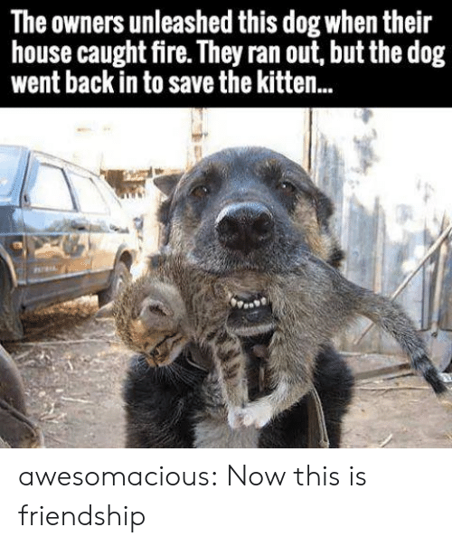 unleashed: The owners unleashed this dog when their  house caught fire. They ran out, but the dog  went back in to save the kitten.. awesomacious:  Now this is friendship