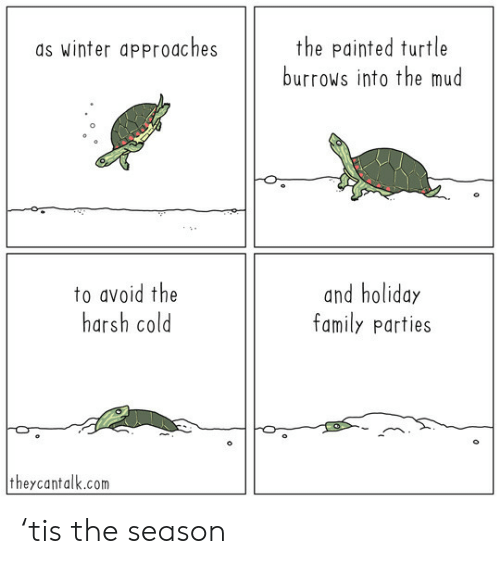 Avoid: the painted turtle  burrows into the mud  as winter approaches  to avoid the  harsh cold  and holiday  family parties  theycantalk.com 'tis the season