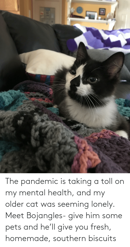 toll: The pandemic is taking a toll on my mental health, and my older cat was seeming lonely. Meet Bojangles- give him some pets and he'll give you fresh, homemade, southern biscuits