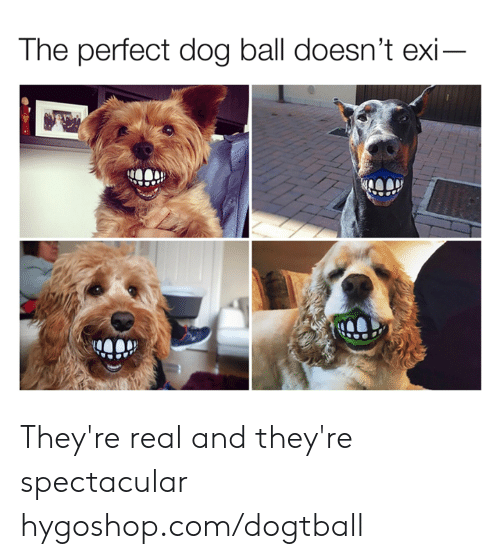 spectacular: The perfect dog ball doesn't exi They're real and they're spectacular  hygoshop.com/dogtball