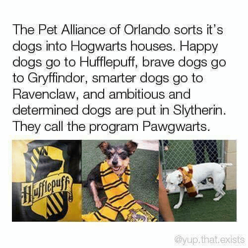 Dank, Dogs, and Gryffindor: The Pet Alliance of Orlando sorts it's  dogs into Hogwarts houses. Happy  dogs go to Hufflepuff, brave dogs go  to Gryffindor, smarter dogs go to  Ravenclaw, and ambitious and  determined dogs are put in Slytherin  They call the program Pawgwarts.  flefferuyy  @yup.that.exists