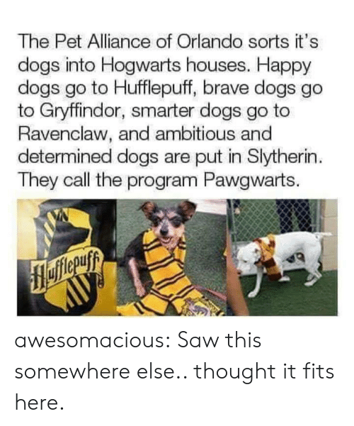 Dogs, Gryffindor, and Saw: The Pet Alliance of Orlando sorts it's  dogs into Hogwarts houses. Happy  dogs go to Hufflepuff, brave dogs go  to Gryffindor, smarter dogs go to  Ravenclaw, and ambitious and  determined dogs are put in Slytherin  They call the program Pawgwarts. awesomacious:  Saw this somewhere else.. thought it fits here.