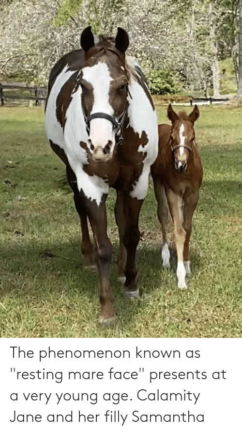 """Resting: The phenomenon known as """"resting mare face"""" presents at a very young age. Calamity Jane and her filly Samantha"""