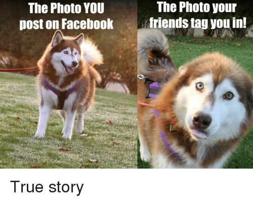 True, True Story, and Photo: The Photo your  The Photo YOU  post on Facebookfriends tag you in! True story