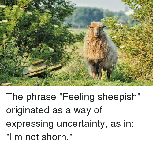 The Phrase Feeling Sheepish Originated As A Way Of Expressing