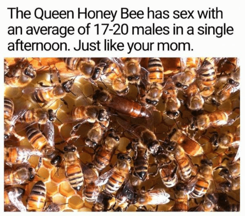 Sex, Queen, and Mom: The Queen Honey Bee has sex with  an average of 17-20 males in a single  afternoon. Just like your mom.