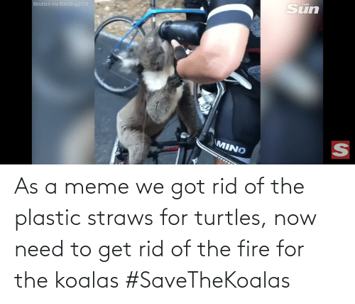 turtles: THE  Reuters via BikeBug2019  MINO  SI As a meme we got rid of the plastic straws for turtles, now need to get rid of the fire for the koalas #SaveTheKoalas