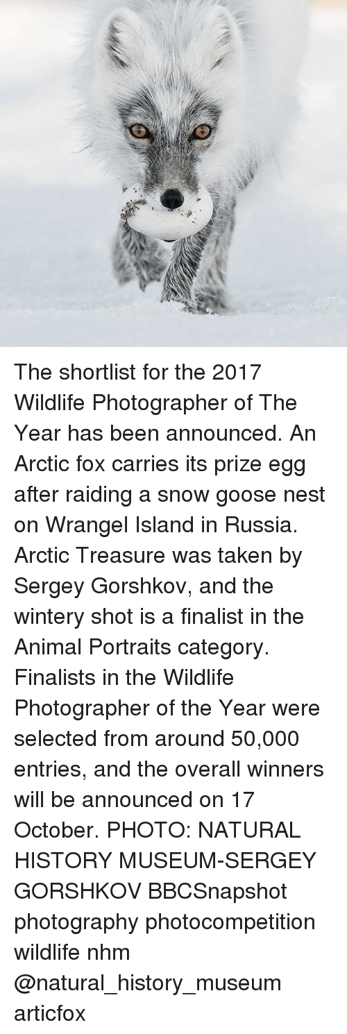 shotting: The shortlist for the 2017 Wildlife Photographer of The Year has been announced. An Arctic fox carries its prize egg after raiding a snow goose nest on Wrangel Island in Russia. Arctic Treasure was taken by Sergey Gorshkov, and the wintery shot is a finalist in the Animal Portraits category. Finalists in the Wildlife Photographer of the Year were selected from around 50,000 entries, and the overall winners will be announced on 17 October. PHOTO: NATURAL HISTORY MUSEUM-SERGEY GORSHKOV BBCSnapshot photography photocompetition wildlife nhm @natural_history_museum articfox