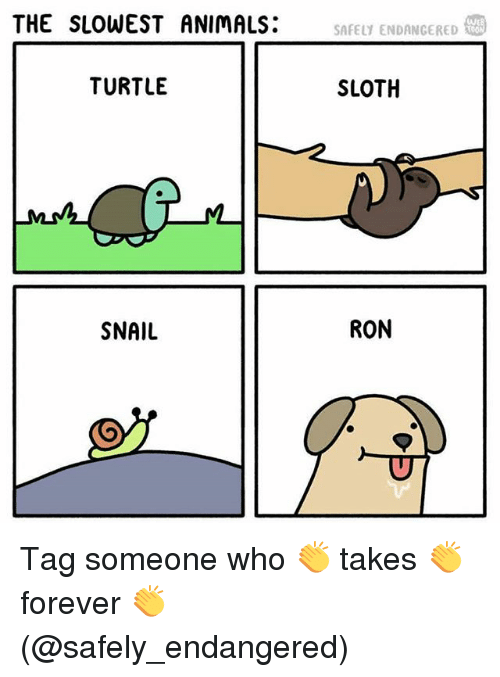 Snailed: THE SLOWEST ANIMALS:  SAFELY ENDANGERED  TURTLE  SLOTH  SNAIL  RON Tag someone who 👏 takes 👏 forever 👏 (@safely_endangered)