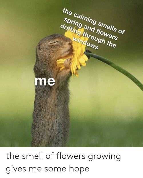 Smell: the smell of flowers growing gives me some hope