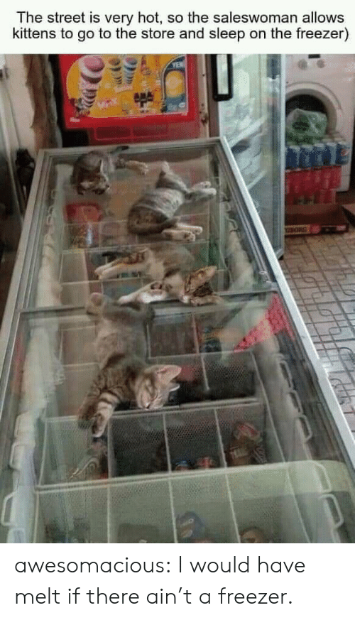 yen: The street is very hot, so the saleswoman allows  kittens to go to the store and sleep on the freezer)  YEN awesomacious:  I would have melt if there ain't a freezer.