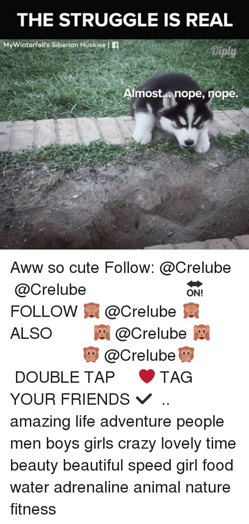 awws: THE STRUGGLE IS REAL  MyWinterfell's Siberian Huskies f  Diply  Almostnope, nope.  Ain Aww so cute Follow: @Crelube ⠀⠀⠀⠀ ⠀@Crelube ⠀⠀⠀⠀ ⠀⠀ ⠀⠀⠀⠀⠀ ⠀⠀🔛FOLLOW 🙈 @Crelube 🙈 ⠀⠀⠀⠀ ⠀⠀⠀⠀⠀⠀ALSO ⠀ 🙉 @Crelube 🙉 ⠀ ⠀⠀ ⠀ ⠀ ⠀ ⠀ ⠀ ⠀⠀⠀⠀⠀ 🙊 @Crelube🙊 ⠀⠀⠀⠀ ⠀ ⠀⠀⠀⠀ DOUBLE TAP ❤️ TAG YOUR FRIENDS ✔️ ⠀⠀⠀⠀ .. amazing life adventure people men boys girls crazy lovely time beauty beautiful speed girl food water adrenaline animal nature fitness