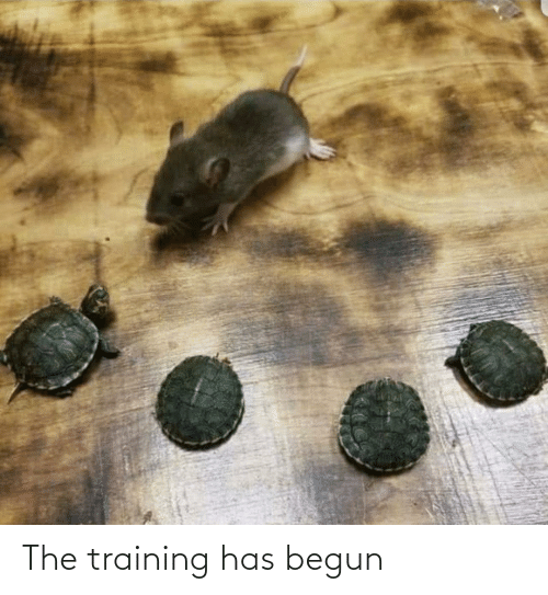 Begun: The training has begun