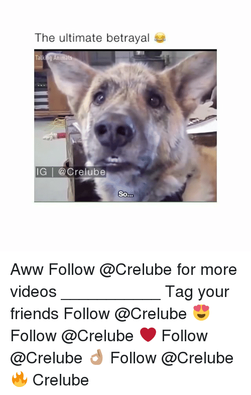 awws: The ultimate betrayal  IG | @Crelube  So Aww Follow @Crelube for more videos ___________ Tag your friends Follow @Crelube 😍 Follow @Crelube ❤ Follow @Crelube 👌🏽 Follow @Crelube 🔥 Crelube