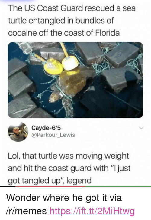 """Lol, Memes, and Cocaine: The US Coast Guard rescued a sea  turtle entangled in bundles of  cocaine off the coast of Florida  Cayde-6'5  @Parkour Lewis  Lol, that turtle was moving weight  and hit the coast guard with """"Ijust  got tangled up, legend <p>Wonder where he got it via /r/memes <a href=""""https://ift.tt/2MiHtwg"""">https://ift.tt/2MiHtwg</a></p>"""