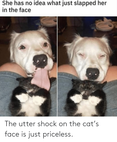 shock: The utter shock on the cat's face is just priceless.