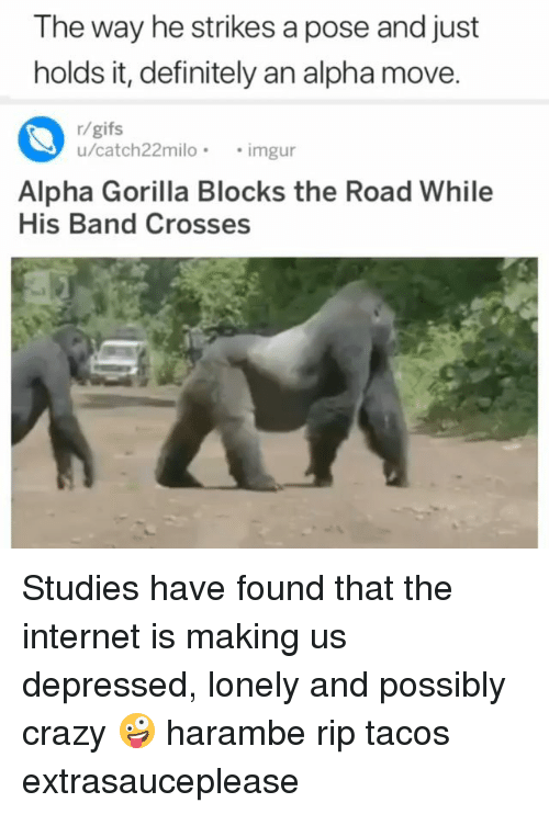 Crazy, Definitely, and Internet: The way he strikes a pose and just  holds it, definitely an alpha move.  r/gifs  u/catch22milo.imgur  Alpha Gorilla Blocks the Road While  His Band Crosses Studies have found that the internet is making us depressed, lonely and possibly crazy 🤪 harambe rip tacos extrasauceplease