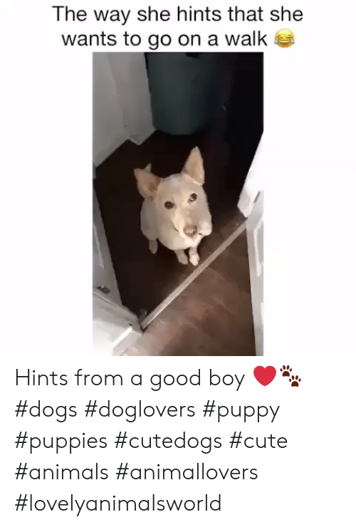 Animals, Cute, and Cute Animals: The way she hints that she  wants to go on a walk Hints from a good boy ❤️🐾 #dogs #doglovers #puppy #puppies #cutedogs #cute #animals #animallovers #lovelyanimalsworld