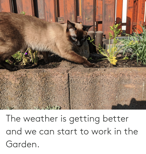 Getting Better: The weather is getting better and we can start to work in the Garden.