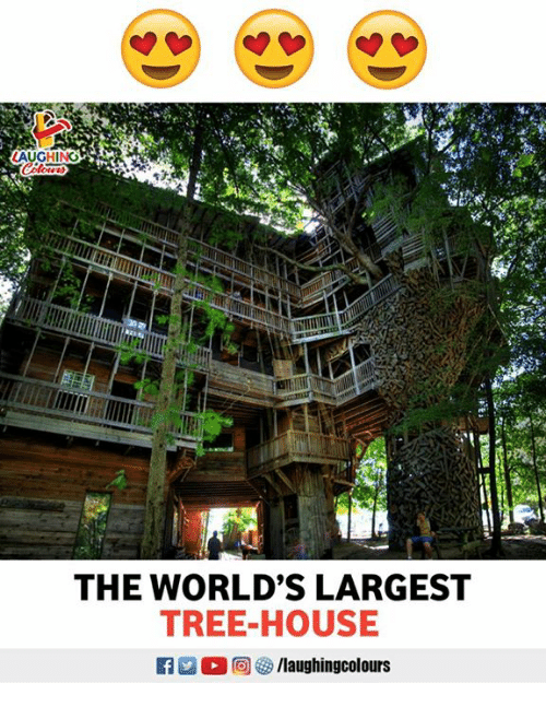House, Tree, and Indianpeoplefacebook: THE WORLD'S LARGEST  TREE-HOUSE
