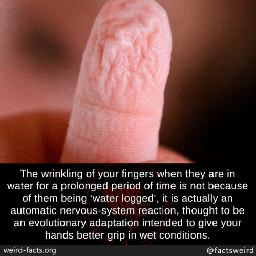 nervous system: The wrinkling of your fingers when they are in  water for a prolonged period of time is not because  of them being 'water logged', it is actually an  automatic nervous-system reaction, thought to be  an evolutionary adaptation intended to give your  hands better grip in wet conditions.  weird-facts.org  @factsweird