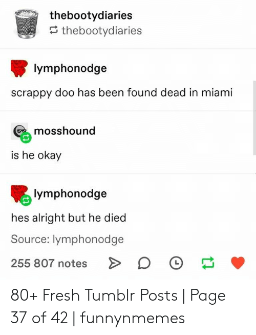 Tumblr Posts: thebootydiaries  thebootydiaries  lymphonodge  scrappy doo has been found dead in miami  mosshound  is he okay  lymphonodge  hes alright but he died  Source: lymphonodge  255 807 notes 80+ Fresh Tumblr Posts | Page 37 of 42 | funnynmemes