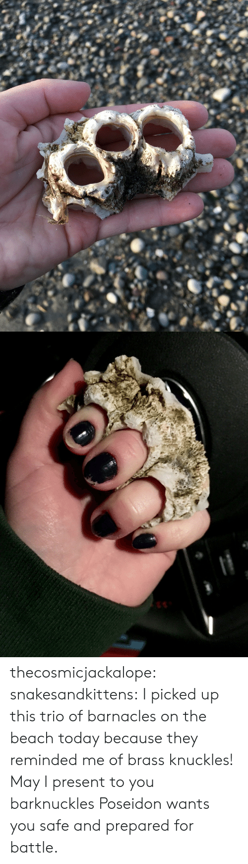 brass: thecosmicjackalope: snakesandkittens:  I picked up this trio of barnacles on the beach today because they reminded me of brass knuckles! May I present to you  barknuckles  Poseidon wants you safe and prepared for battle.