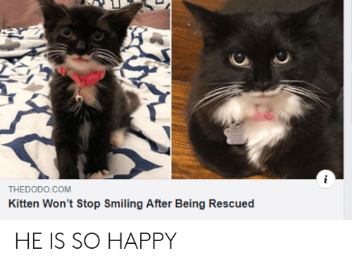 Wont Stop: THEDODO.COM  Kitten Won't Stop Smiling After Being Rescued HE IS SO HAPPY