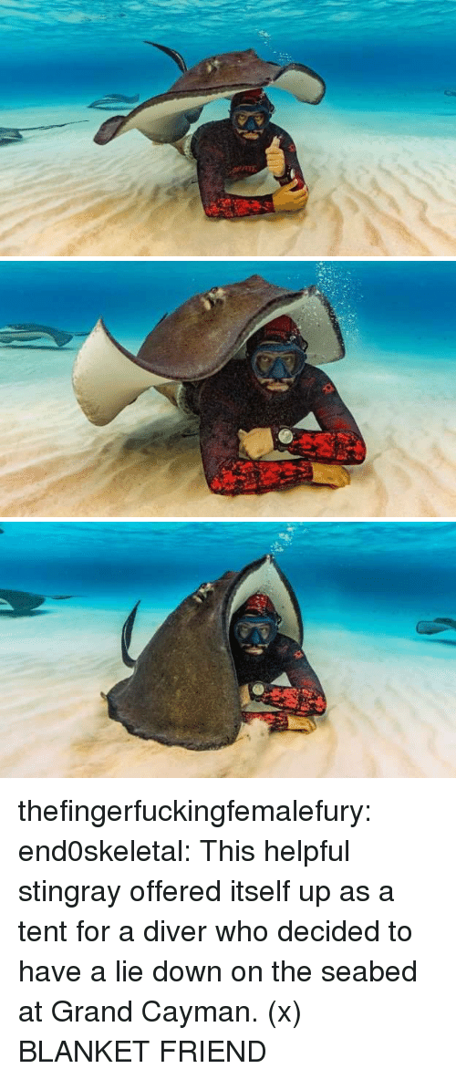 Tumblr, Blog, and Http: thefingerfuckingfemalefury:  end0skeletal:  This helpful stingray offered itself up as a tent for a diver who decided to have a lie down on the seabed at Grand Cayman. (x) BLANKET FRIEND