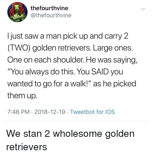 """Saw, Stan, and Wholesome: thefourthvine  @thefourthvine  I just saw a man pick up and carry 2  IWO) golden retrievers. Large ones  One on each shoulder. He was saying,  """"You always do this. You SAID you  wanted to go for a walk!"""" as he picked  them up  7:46 PM 2018-12-19 Tweetbot for ioS We stan 2 wholesome golden retrievers"""
