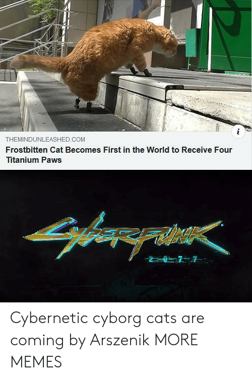 Cats, Dank, and Memes: THEMINDUNLEASHED.COM  Frostbitten Cat Becomes First in the World to Receive Four  Titanium Paws Cybernetic cyborg cats are coming by Arszenik MORE MEMES