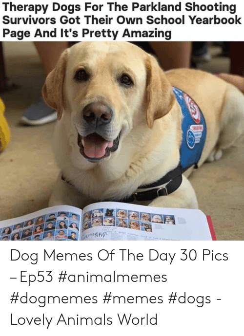 Memes Dogs: Therapy Dogs For The Parkland Shooting  Survivors Got Their Own School Yearbook  Page And It's Pretty Amazing  wnshy Dog Memes Of The Day 30 Pics – Ep53 #animalmemes #dogmemes #memes #dogs - Lovely Animals World